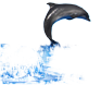 dsgn_533_dolphin_2.png